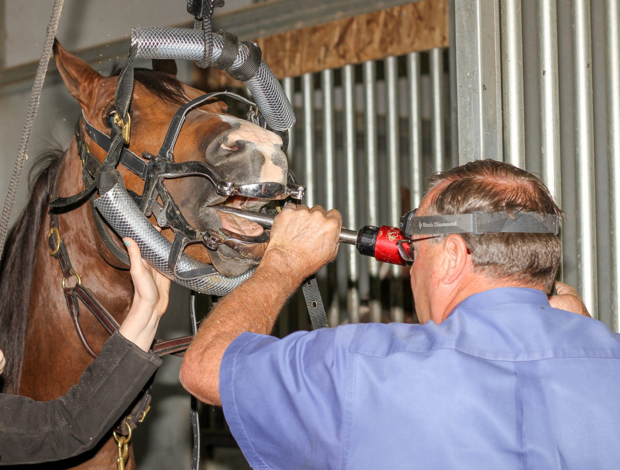 power floating horse dental work is available